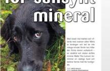 Reportage om HundCampus i Hundsport