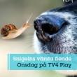 HundCampus på Tv 4